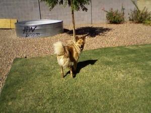 chuy backyard