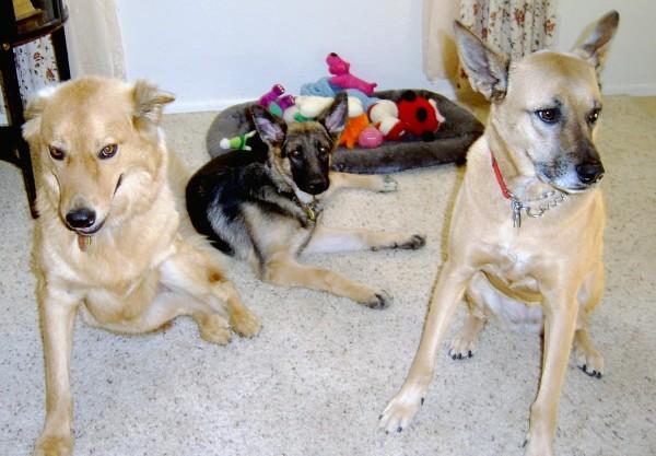 Chuy, Anka & Gretchen